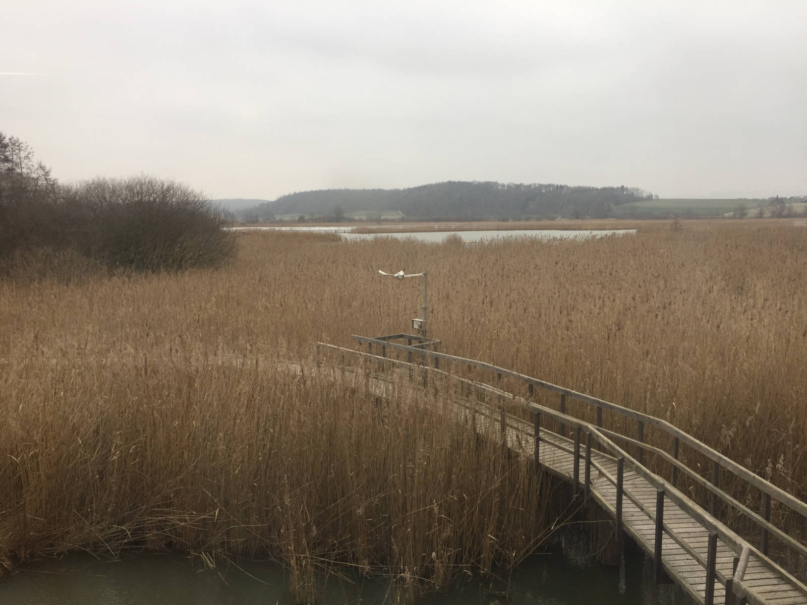 The mesh of BirdLife in Riedt bei Neerach